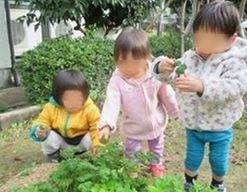 HANA保育園(兵庫県芦屋市)の様子