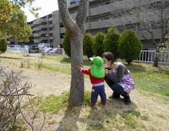 もりのなかま保育園泉中央園(宮城県仙台市泉区)の様子