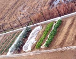 つぼみの森保育園(千葉県市原市)の様子