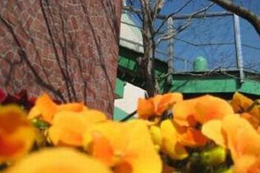 心花幼稚園(千葉県市原市)