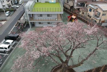 わらべ東久留米保育園(東京都東久留米市)